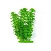 Rostlina Ambulia 46cm