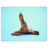 Kořen mopani 12-25cm